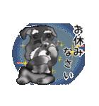 シュナウザー犬の年末年始スタンプ(個別スタンプ:22)