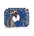 シュナウザー犬の年末年始スタンプ(個別スタンプ:24)