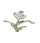 四季の草花(陶芸家描き下ろしシリーズ)(個別スタンプ:15)