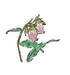 四季の草花(陶芸家描き下ろしシリーズ)(個別スタンプ:16)