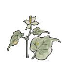 四季の草花(陶芸家描き下ろしシリーズ)(個別スタンプ:17)