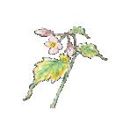 四季の草花(陶芸家描き下ろしシリーズ)(個別スタンプ:20)