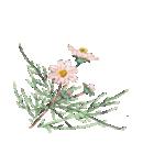 四季の草花(陶芸家描き下ろしシリーズ)(個別スタンプ:26)