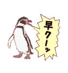 動物スタンプ 【 ZOO.Ⅱ】(個別スタンプ:17)