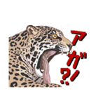 動物スタンプ 【 ZOO.Ⅱ】(個別スタンプ:33)
