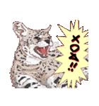 動物スタンプ 【 ZOO.Ⅱ】(個別スタンプ:36)