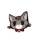 きじとら猫 ふうちゃんの日常(個別スタンプ:01)