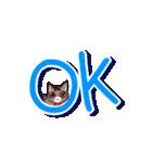 きじとら猫 ふうちゃんの日常(個別スタンプ:04)