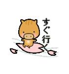 いのししうりぼう  うりりん  春スタンプ(個別スタンプ:14)