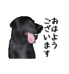 動く!黒ラブⅡ(個別スタンプ:1)