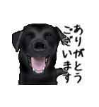動く!黒ラブⅡ(個別スタンプ:2)