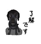 動く!黒ラブⅡ(個別スタンプ:3)