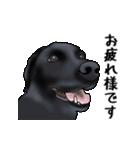 動く!黒ラブⅡ(個別スタンプ:6)