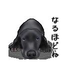 動く!黒ラブⅡ(個別スタンプ:10)