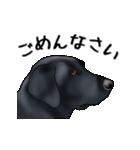 動く!黒ラブⅡ(個別スタンプ:11)