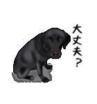 動く!黒ラブⅡ(個別スタンプ:12)