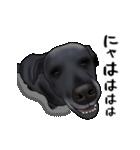 動く!黒ラブⅡ(個別スタンプ:21)