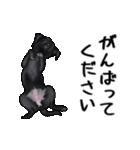動く!黒ラブⅡ(個別スタンプ:23)