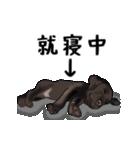 動く!黒ラブⅡ(個別スタンプ:24)