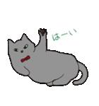 もっちりグレー猫の使いやすいスタンプ(個別スタンプ:11)
