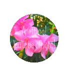 EUROPE flower♡(個別スタンプ:11)
