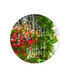 EUROPE flower♡(個別スタンプ:13)