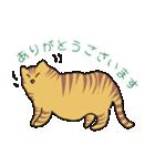 キジトラ猫の毎日使いやすいスタンプ(個別スタンプ:02)