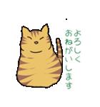 キジトラ猫の毎日使いやすいスタンプ(個別スタンプ:03)