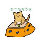 キジトラ猫の毎日使いやすいスタンプ(個別スタンプ:05)