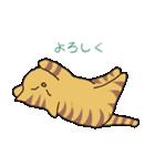 キジトラ猫の毎日使いやすいスタンプ(個別スタンプ:14)