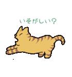 キジトラ猫の毎日使いやすいスタンプ(個別スタンプ:17)
