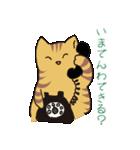 キジトラ猫の毎日使いやすいスタンプ(個別スタンプ:19)