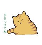 キジトラ猫の毎日使いやすいスタンプ(個別スタンプ:21)