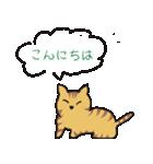 キジトラ猫の毎日使いやすいスタンプ(個別スタンプ:24)