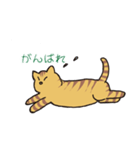 キジトラ猫の毎日使いやすいスタンプ(個別スタンプ:25)