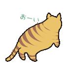 キジトラ猫の毎日使いやすいスタンプ(個別スタンプ:27)
