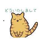 キジトラ猫の毎日使いやすいスタンプ(個別スタンプ:28)