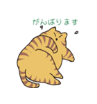 キジトラ猫の毎日使いやすいスタンプ(個別スタンプ:32)