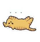 キジトラ猫の毎日使いやすいスタンプ(個別スタンプ:33)
