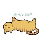 キジトラ猫の毎日使いやすいスタンプ(個別スタンプ:37)