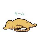 キジトラ猫の毎日使いやすいスタンプ(個別スタンプ:38)