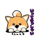 柴犬と4匹の先住猫スタンプ(個別スタンプ:01)