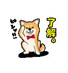 柴犬と4匹の先住猫スタンプ(個別スタンプ:11)