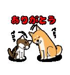 柴犬と4匹の先住猫スタンプ(個別スタンプ:13)