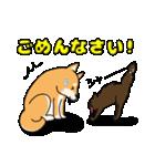 柴犬と4匹の先住猫スタンプ(個別スタンプ:14)