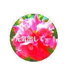 EUROPE flower2♡♡[日本語](個別スタンプ:01)