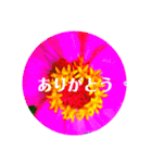 EUROPE flower2♡♡[日本語](個別スタンプ:04)