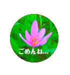 EUROPE flower2♡♡[日本語](個別スタンプ:07)