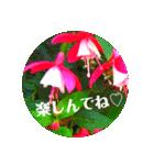 EUROPE flower2♡♡[日本語](個別スタンプ:10)
