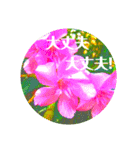 EUROPE flower2♡♡[日本語](個別スタンプ:11)